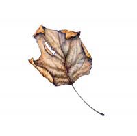leaf2_large