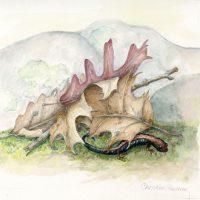 Shenandoah-Salamander